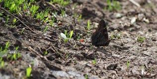 蝴蝶坐地面 免版税库存照片