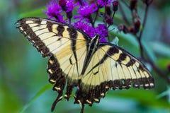 蝴蝶坐花 免版税库存照片