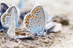 蝴蝶家庭 库存图片