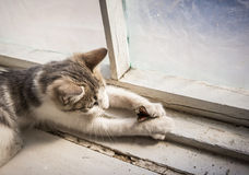 蝴蝶小猫使用 免版税库存照片