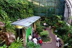 蝴蝶庭院 库存图片