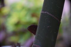 蝴蝶庭院s南泰国 免版税图库摄影