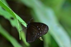 蝴蝶庭院s南泰国 图库摄影