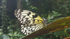 蝴蝶接近 图库摄影