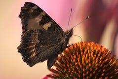 蝴蝶效应 免版税库存图片