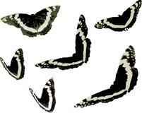 蝴蝶昆虫图表剪贴美术 免版税库存图片
