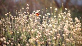 蝴蝶本质上 免版税图库摄影