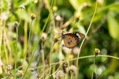 蝴蝶本质夏天结构树 免版税库存照片