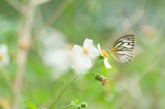 蝴蝶栖息处 库存图片