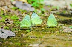 蝴蝶栖息处 免版税库存照片