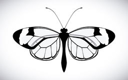 蝴蝶检查设计项目类似更多我的投资组合的系列 免版税库存照片
