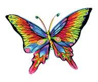 蝴蝶热带颜色pimk黄色蓝绿色紫罗兰回归线 图库摄影