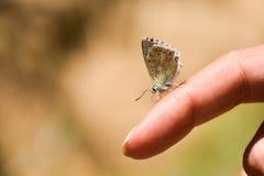蝴蝶的特写镜头在妇女` s手指栖息 库存照片