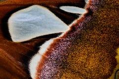 蝴蝶的秀丽样式飞过,宏观样式 图库摄影