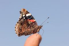 蝴蝶的纵向 免版税库存图片