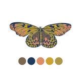 2017年蝴蝶的颜色 免版税库存照片