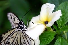 蝴蝶的Potrait 库存照片