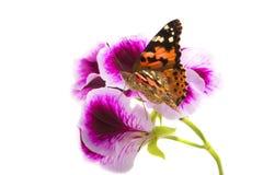 蝶粉花坐 免版税库存图片