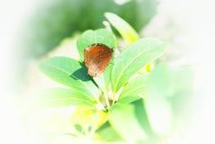 蝴蝶美好的背景 库存图片