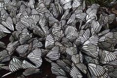 蝴蝶群  免版税库存照片