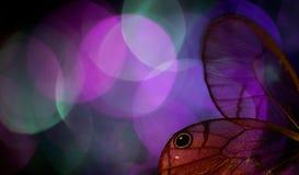 蝴蝶翼和五颜六色的bokeh 免版税图库摄影