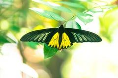 蝴蝶背景在泰国的公园 免版税库存照片