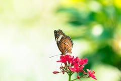 蝴蝶背景在泰国的公园 库存照片