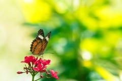 蝴蝶背景在泰国的公园 库存图片