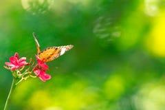 蝴蝶背景在泰国的公园 免版税库存图片