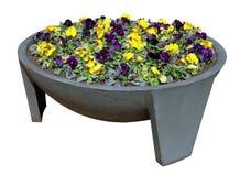 蝴蝶花春天柔和的黄色和蓝色花 免版税库存图片