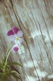 蝴蝶花花 库存图片