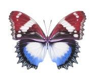蝴蝶蓝色红色 免版税库存图片