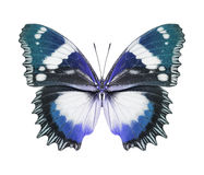 蝴蝶蓝色 库存图片