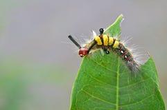 蝴蝶蠕虫 库存图片