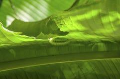 蝴蝶蠕虫 免版税库存图片