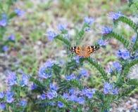 蝴蝶被绘的夫人 免版税库存照片