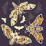 蝴蝶设置了 免版税库存图片