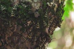 蝴蝶谷,自然保护 Lindos 希腊 库存照片
