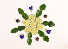 蝴蝶豌豆,肥皂坚果树 并且非洲黑人石灰,水蛭石灰,毛里求斯papeda 图库摄影
