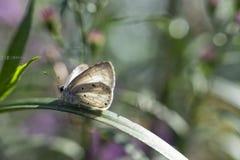 蝴蝶采取sunbath 库存图片