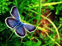 蝴蝶释放 图库摄影