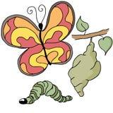 蝴蝶阶段 向量例证