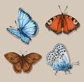 蝴蝶集 向量例证