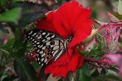 蝴蝶,一只美丽和五颜六色的昆虫 库存照片