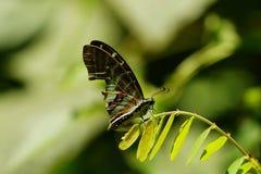 蝴蝶,一只美丽和五颜六色的昆虫 库存图片