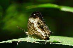 蝴蝶,一只美丽和五颜六色的昆虫 免版税图库摄影