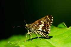 蝴蝶,一只美丽和五颜六色的昆虫 免版税库存图片