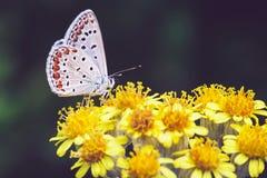 蝴蝶,春天,夏天,宏指令, 免版税图库摄影