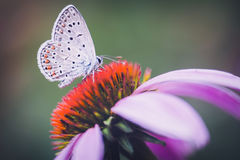 蝴蝶,春天,夏天,宏指令, 库存照片