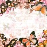 蝴蝶,花 黑色看板卡空白色的花卉花的虹膜 葡萄酒水彩 免版税库存照片